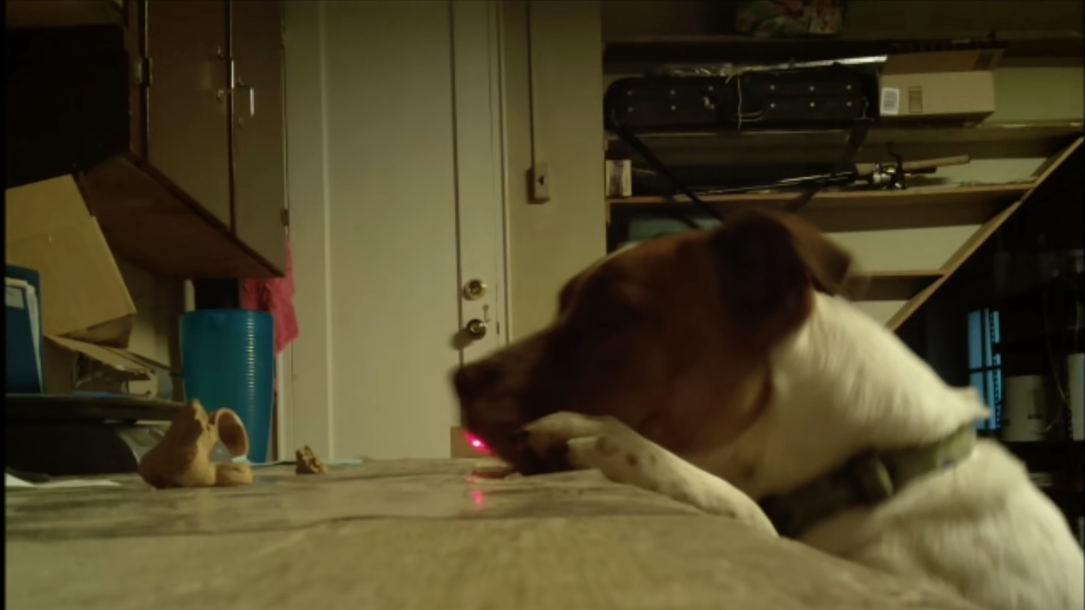 laser dog watcher the magpi magazinethe magpi magazine