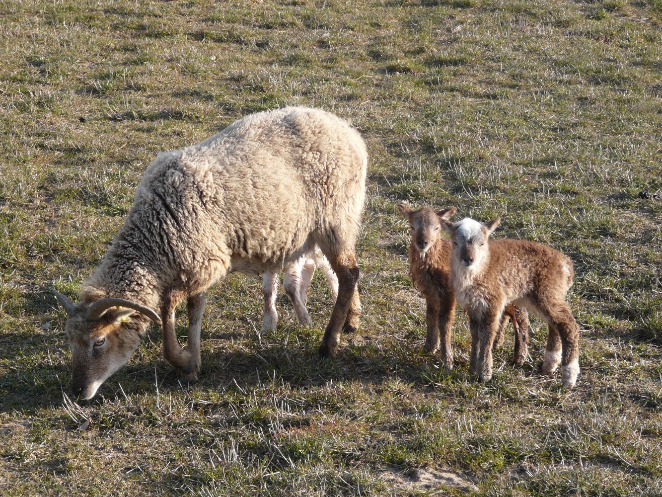 eIDShepherd: Sheep Tagger - The MagPi MagazineThe MagPi Magazine