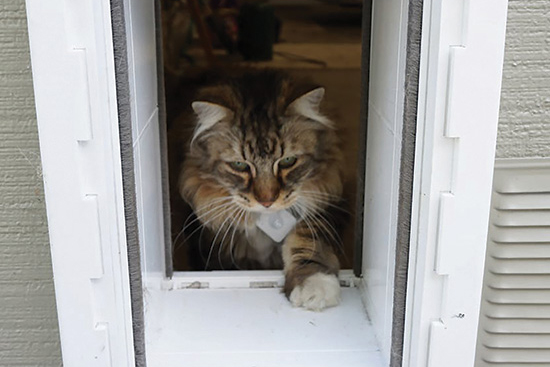 The RPI 3 BLE Cat Door is a motorised Raspberry Pi cat flap project with some high-tech smarts. It uses a Raspberry Pi 3 Node-RED and Bluetooth tracking ... & Raspberry Pi cat flap project: RPi 3 BLE Bluetooth tag-sensing ... Pezcame.Com