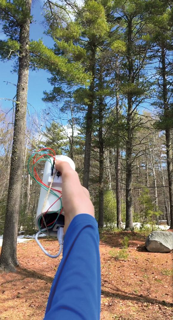 Seeing Wand Tree