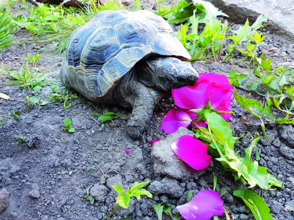 Tortoise Fridge - The MagPi Magazine
